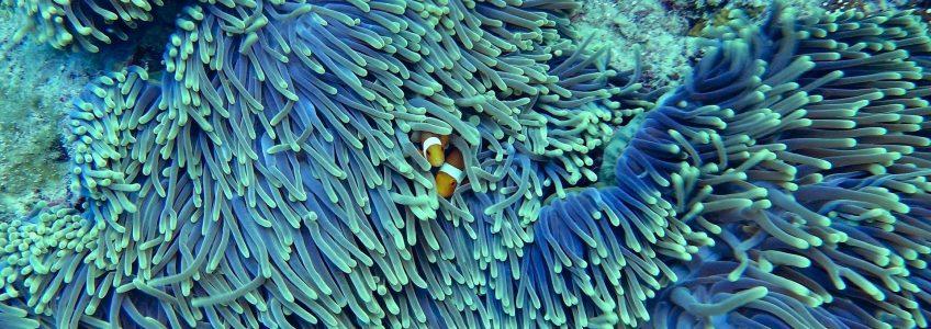 Corales biónicos impresos en 3D pueden salvar a la selva del mar