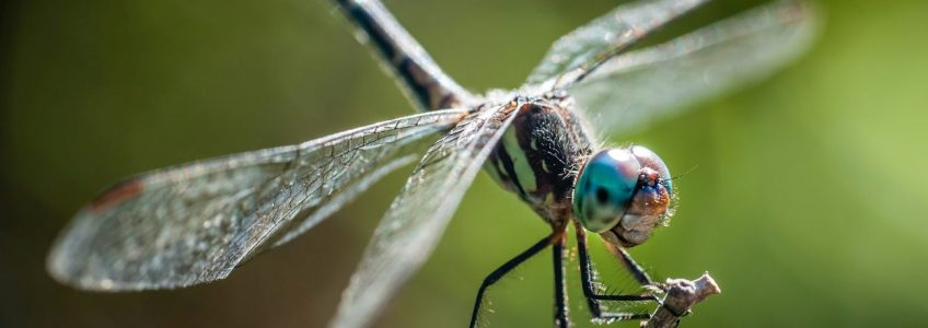 Los insectos colaboran en la lucha contra las superbacterias • Tendencias21