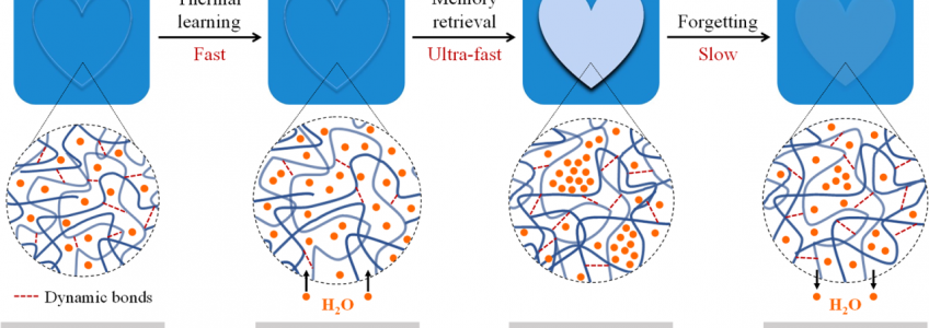 Un hidrogel imita la capacidad de memoria del cerebro humano • Tendencias21