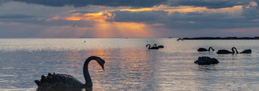 """Descubren la forma de anticiparse a los eventos impredecibles o """"cisne negro"""" • Tendencias21"""