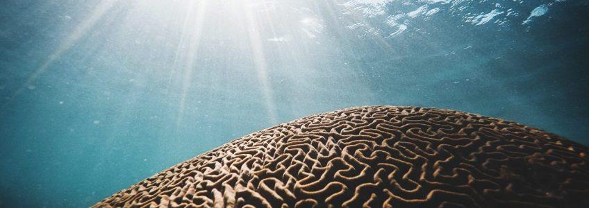 Una nueva tecnología desvelará los secretos del cerebro profundo • Tendencias21